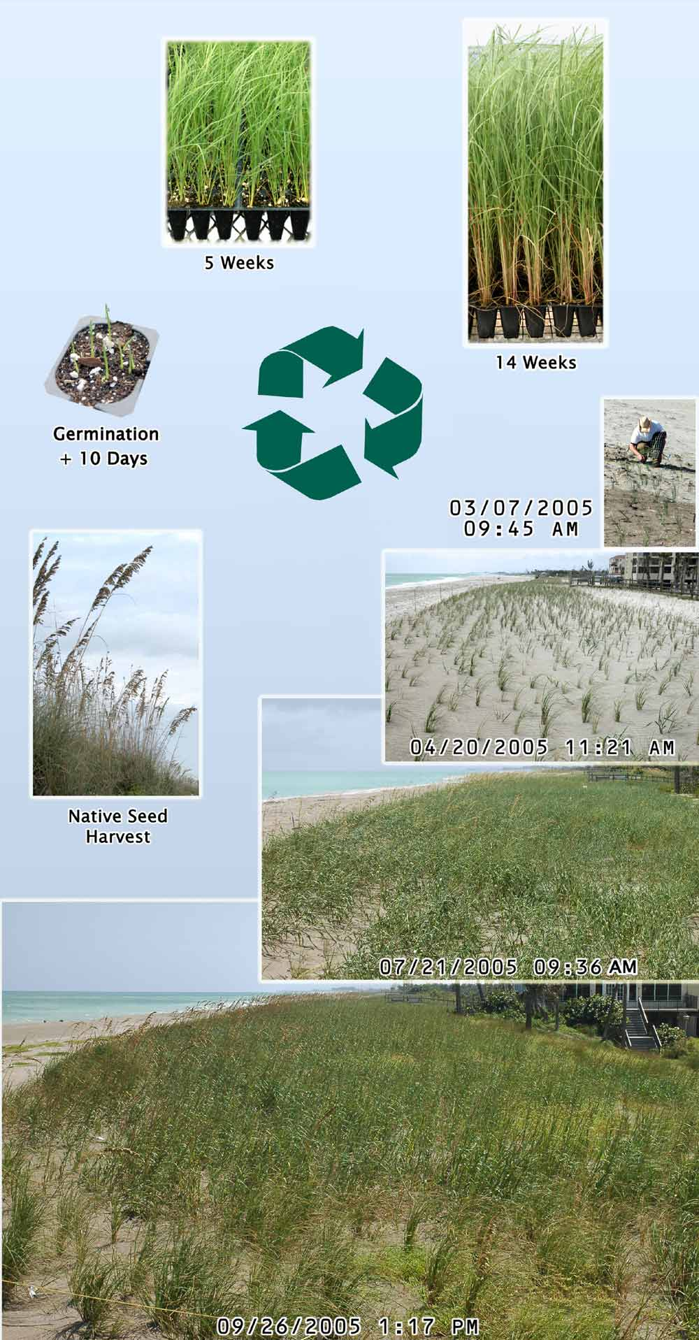 cycle-of-sea-oats-posterweb